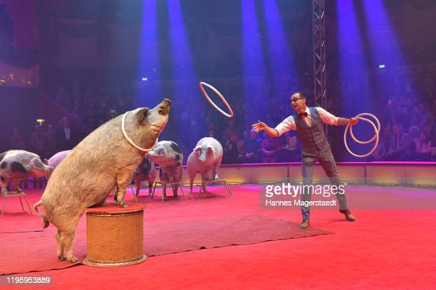 Lars Hölscher performs with pigs at the premiere of the Circus Krone new winter program on December 25 2019 in Munich Germany