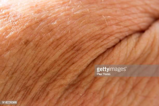 las arrugas nos cuentan la vida - arrugado fotografías e imágenes de stock