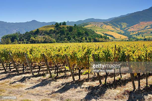 las niñas vineyard - colchagua valley(chile) - chile stock pictures, royalty-free photos & images