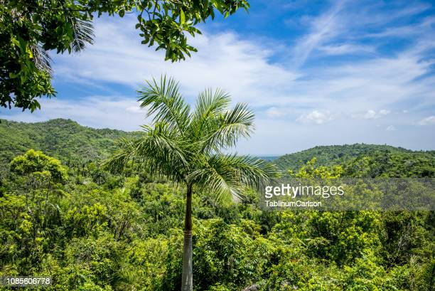 World S Best Las Terrazas Cuba Stock Pictures Photos And