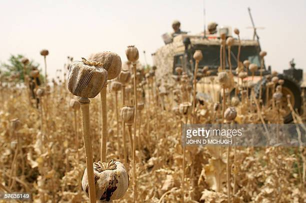 Lashkar Gah, AFGHANISTAN: British soldiers from the 21 Air Assault Battery Royal Artillery, who are providing the Helmand Task Force Provincial...