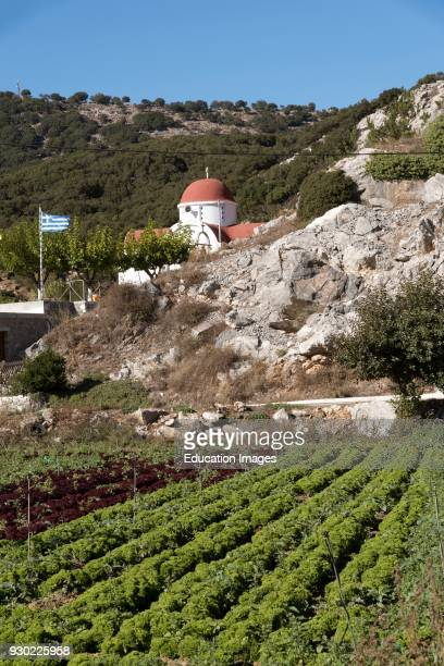 Lasithi plateau Lasithi Crete Greece A church and lettuces growing in rows on this fertile area
