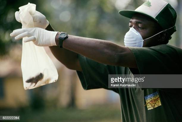 lassa fever study - lassa fever stock pictures, royalty-free photos & images