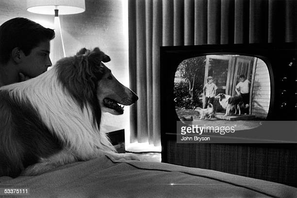 Lassie and costar Tommy Rettig watching themselves on their TV show 'Lassie'
