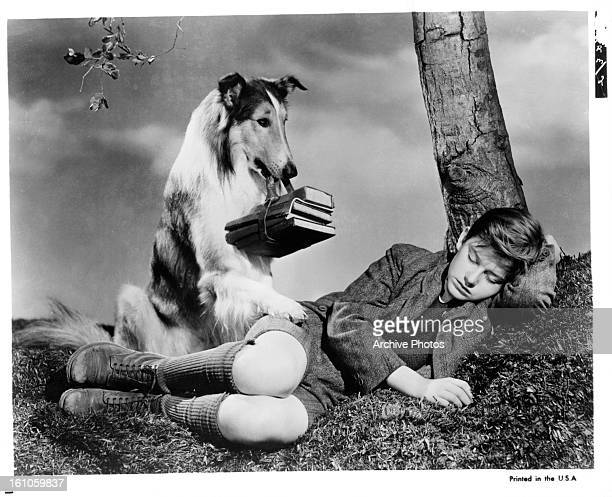 Lassie attempts to wake up Roddy McDowall in a scene from the film 'Lassie Come Home' 1943