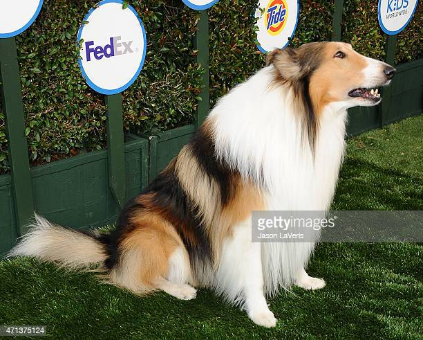 Lassie attends Safe Kids Day at The Lot on April 26 2015 in West Hollywood California