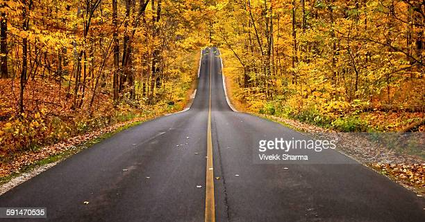 a last autumn walk - columbus ohio stock photos and pictures