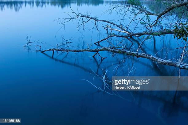 last blue light at a lake, austria, europe - last stock pictures, royalty-free photos & images