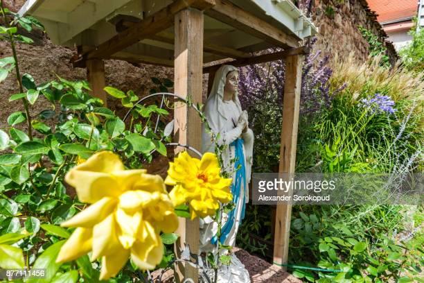 last flowers in the autumnal garden, close-up view - jardin fleuri photos et images de collection