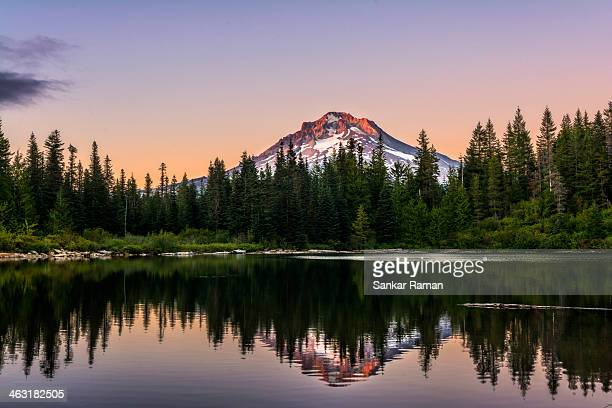 last light - mt hood national forest stock pictures, royalty-free photos & images