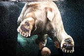 Laatste ijsbeer