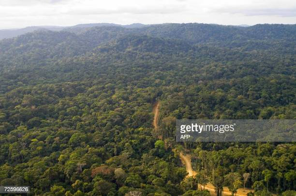 """Pictured dated in July 2006 shows the forest concession of the company """"La Compagnie Equatoriale des Bois"""" , a subsidiary of French forestry group..."""
