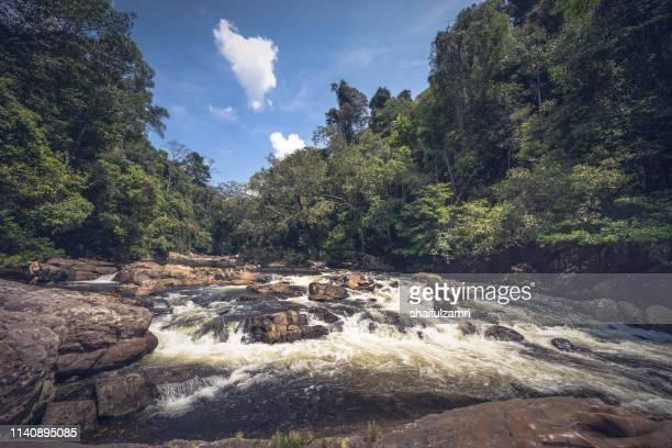 lata berkoh or berkoh waterfall in the kuala tahan national park (taman negara) in pahang, malaysia. - taman negara national park stock photos and pictures