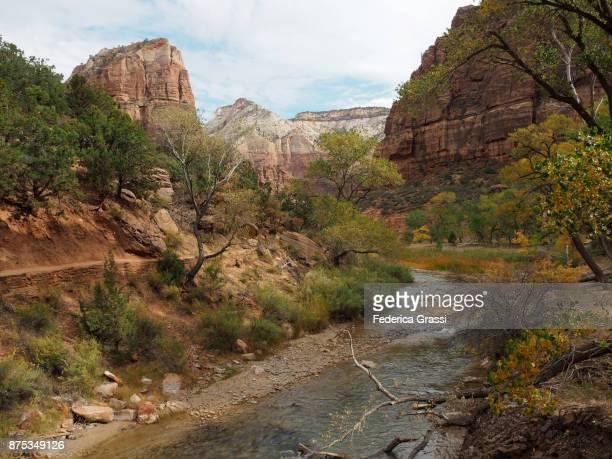 Late Afternoon Along The Virgin River, Zion National Park