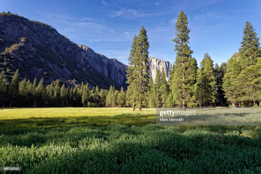 Late afternoon in Yosemite Valley : Stock-Foto
