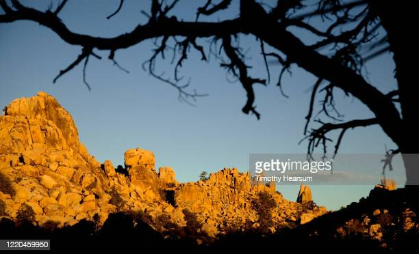 late afternoon light on dead tree branches in foreground; rocky mountains beyond in joshua tree national park - timothy hearsum stock pictures, royalty-free photos & images