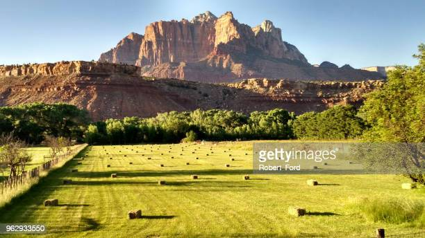 late afternoon light on hay bales in pastures below mt kinesava in zion national park utah - utah stock pictures, royalty-free photos & images