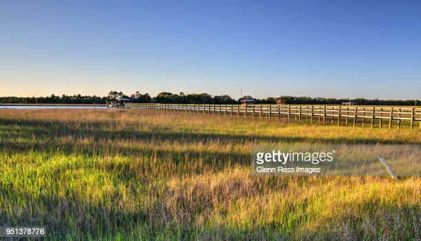 Late Afternoon Marshgrass