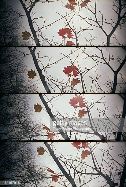 late autumn branch and leaf panels. - bare tree stock pictures, royalty-free photos & images