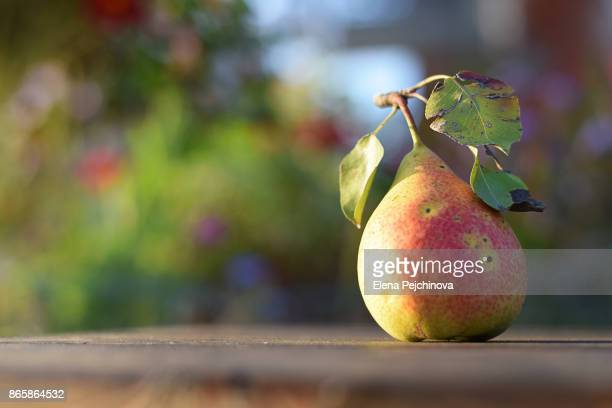 Late autumn pear