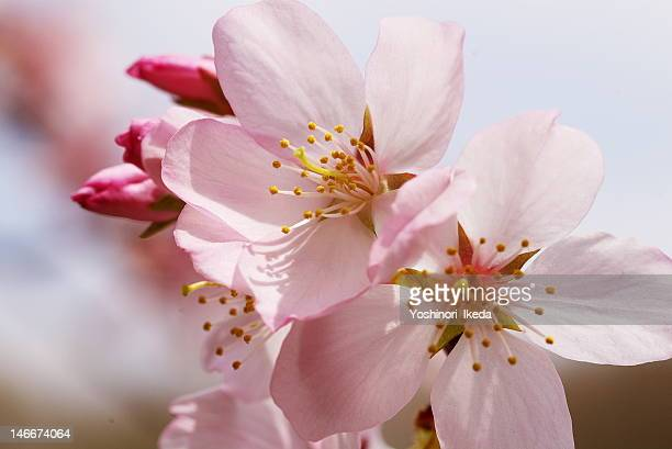 late blooming flowers - chiba city stock pictures, royalty-free photos & images