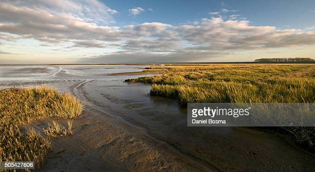 Late evening sunlight at tidal marsh at Dutch coast