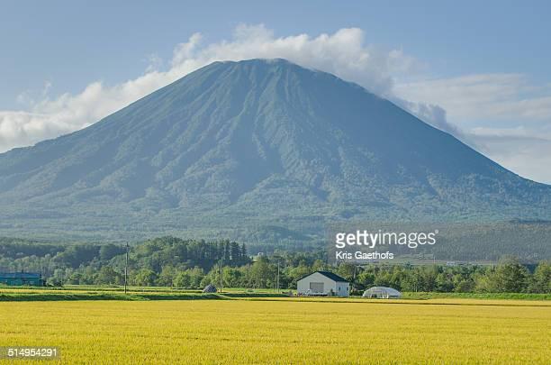 Late summer Mt. Yotei