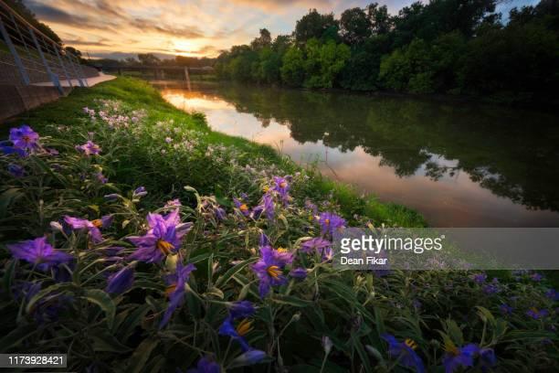 late summer sunrise over the trinity river - フォートワース ストックフォトと画像