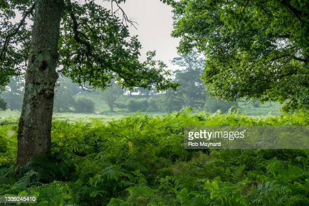 late summer tree in national park, uk - national wildlife reserve stock pictures, royalty-free photos & images