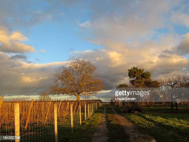 CONTENT] Late winter afternoon sun on path and countryside marked through agricultural production lands and gardens with vines vegetable fruit trees...