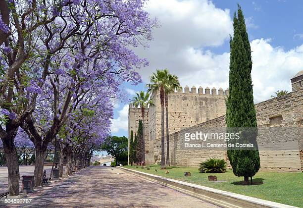 Lateral view of Alcazar of Jerez de la Frontera in Cadiz, Spain in spring with a lovely sky.