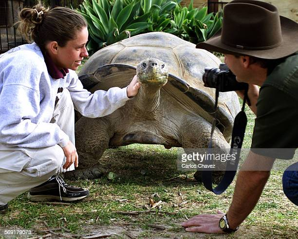 Latest addition to the Moorpark College Teaching Zoo, is a 76–year–old, 500–lbs Galapagos Tortoise named Clarence on loan from the Los Angeles Zoo....