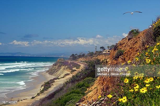 Latest Beach Scene Del Mar
