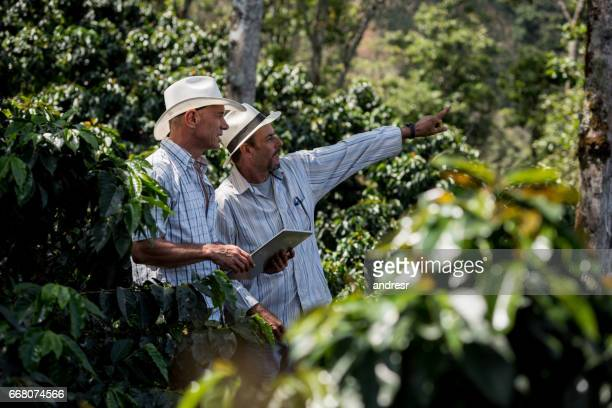 latin american men managing a coffee farm - managing director stock pictures, royalty-free photos & images