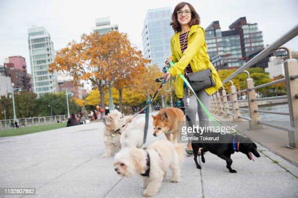 latino woman dog walker - dog walker stock photos and pictures