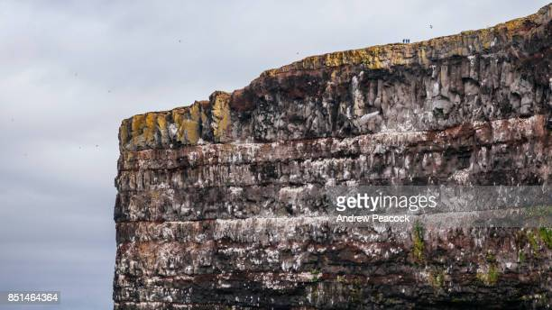 Latrabjarg bird cliff in the Westfjords is the largest sea bird cliff in Europe.