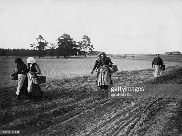 Latvia Courland peasant women return from farm labour