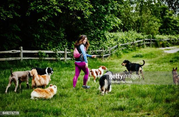 Laughing dog walker walking dogs at dog park