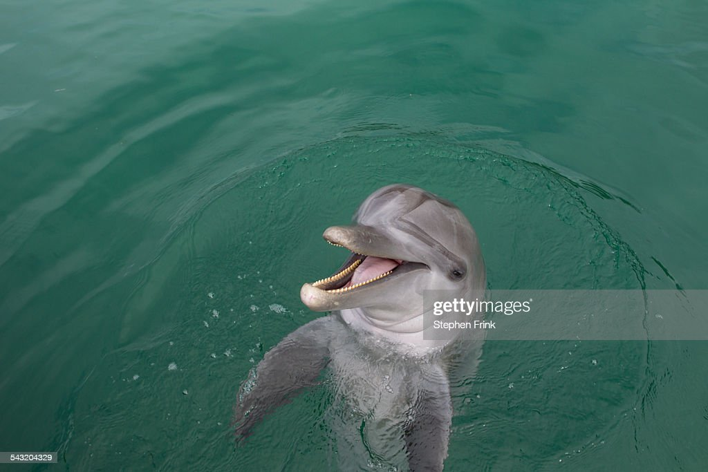 Laughing Dolphin. : Stock Photo