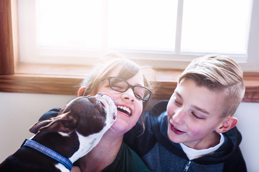 Laughing girl being licked by dog as brother looks on - gettyimageskorea