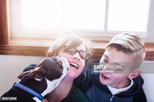 Laughing girl being licked by dog as brother looks on