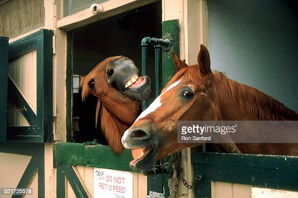 laughing horses - funny horses stock pictures, royalty-free photos & images