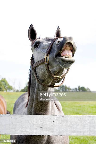 Laughing Thoroughbred Horse