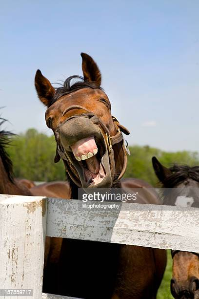 Laughing Thoroughbred Racehorse