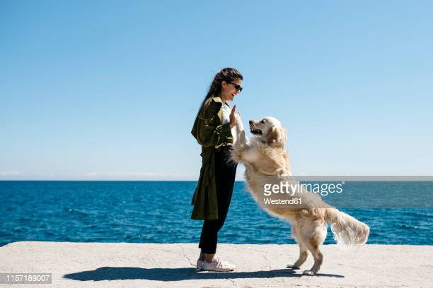 laughing woman playing with her labrador retriever on a dock - animal behavior stock pictures, royalty-free photos & images