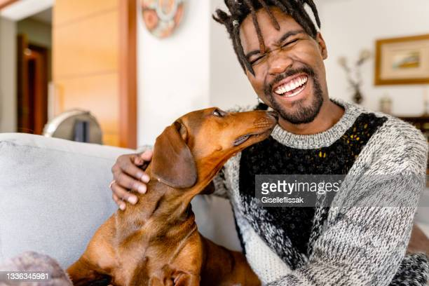 laughing young man petting his daschund at home on his sofa - young animal stock pictures, royalty-free photos & images