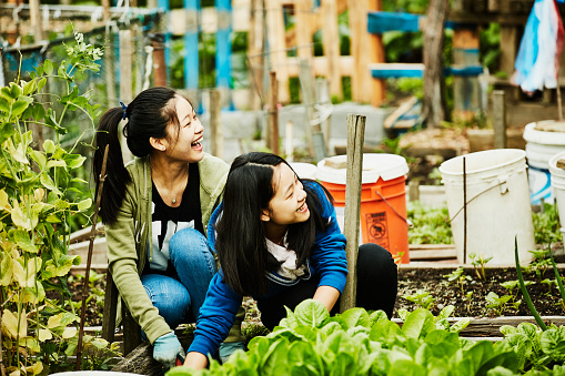 Laughing young women volunteering in community garden - gettyimageskorea