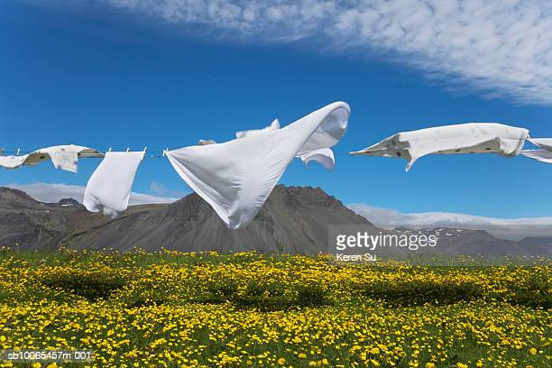 Laundry blowing in wind on meadow with wildflowers