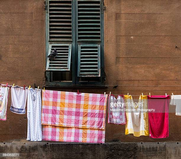 Laundry on a clothesline with pigeon on shutter