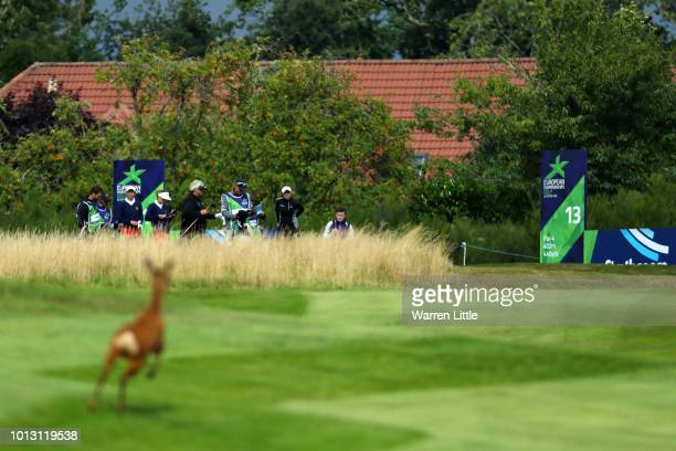 Laura Davies and Georgia Hall of Great Britain prepare to take their tee shot on hole thirteen as a deer runs on the course during match 1 of Group A...